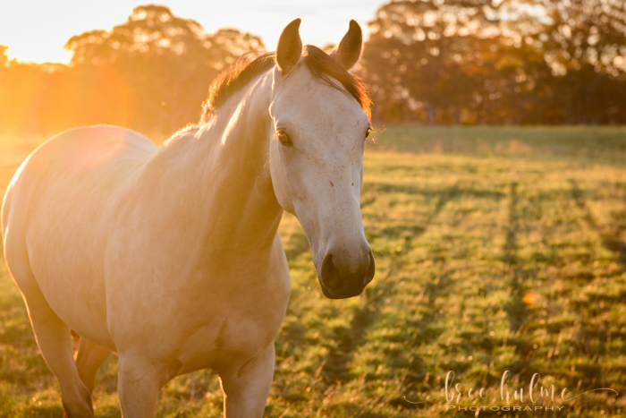Cromer Portrait Photographer Bree hulme of Bree Hulme Photography has fine art prints of animals and nature available for purchase.
