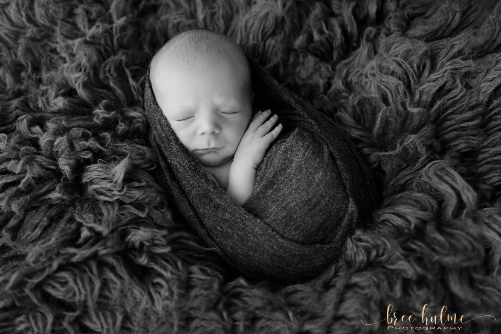 newborn portraits with fur babies newborn photographer Bree Hulme Photography Sydney Northern Beaches and North Shore